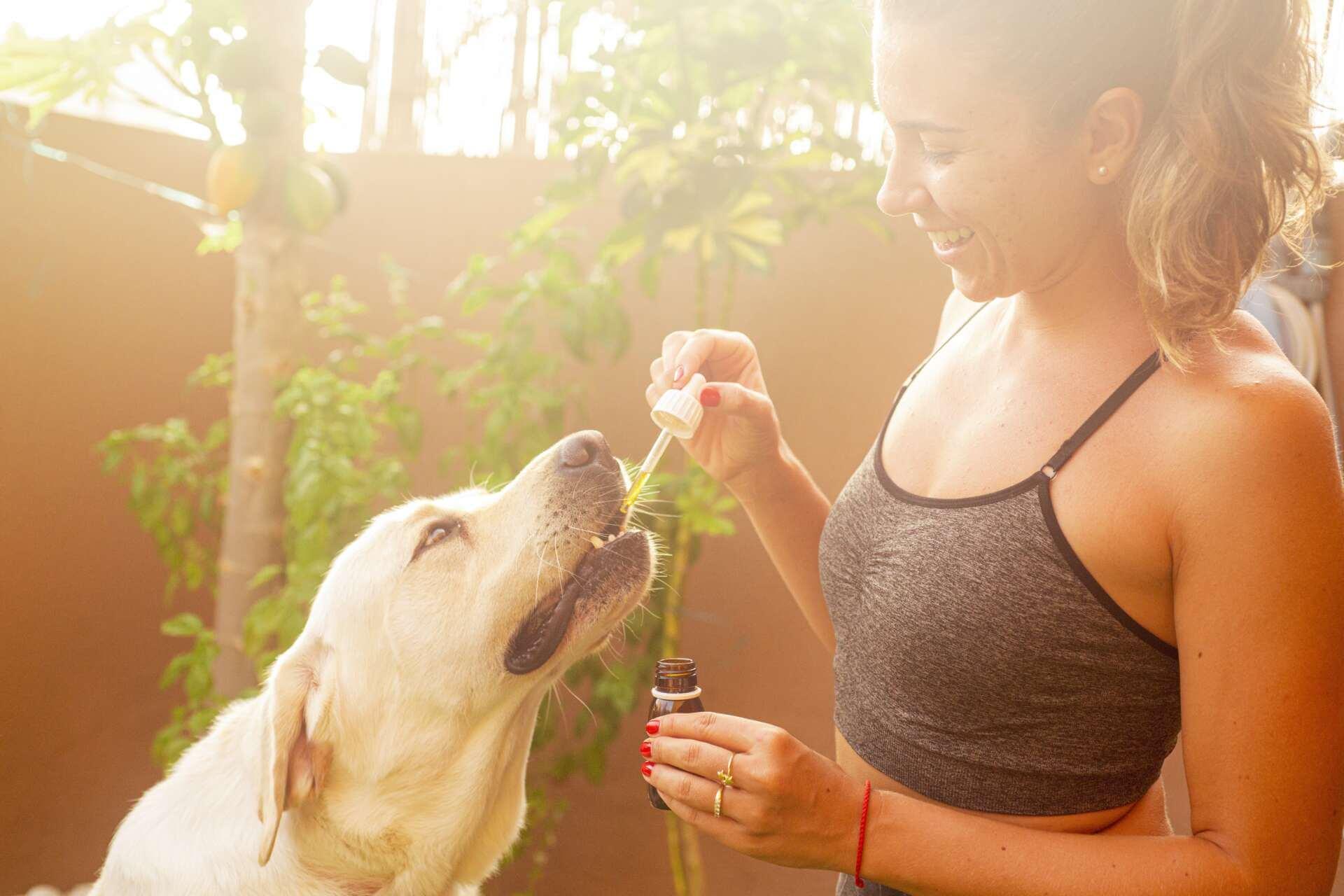 Czy CBD jest bezpieczne dla zwierząt domowych?