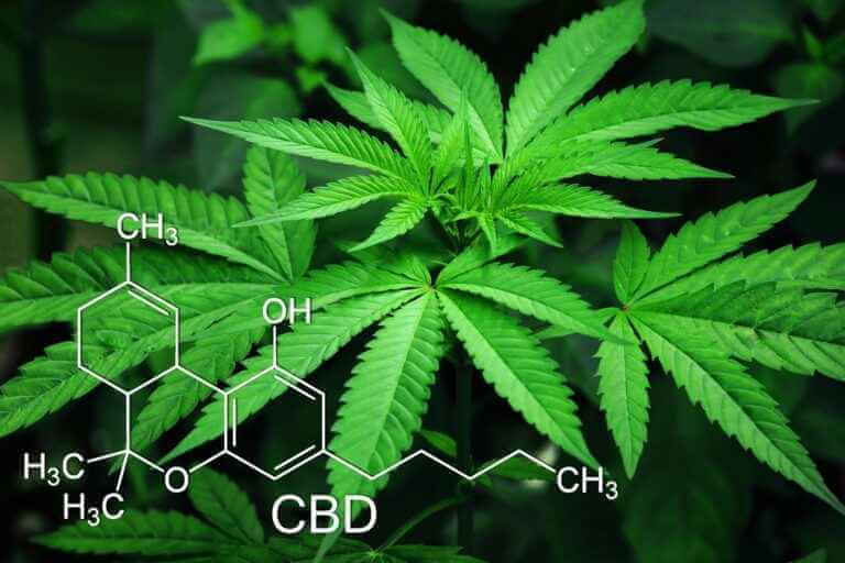 Read more about the article Kannabinoidy i układ endokannabinoidowy, a CBD